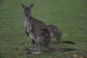 1506 Australien_1020