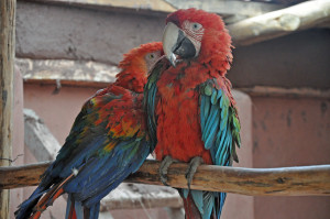 140625 Peru del I 497_redigerad-1